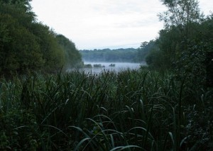 parc naturel de la foret dorient