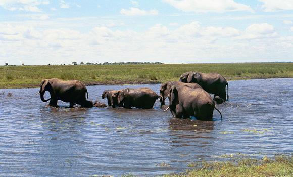 safari 2
