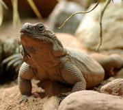 article reptile landau mini