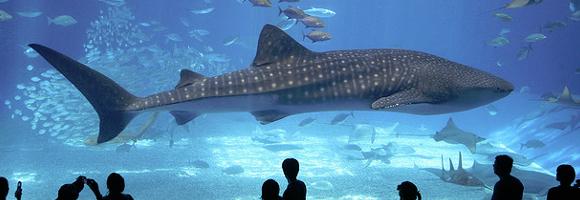 TOP 10 dans LES REFLEXIONS DE FLIP aquarium