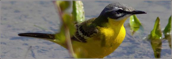 Le top 10 des meilleurs endroits pour observer les oiseaux for Les oiseaux du sud de la france
