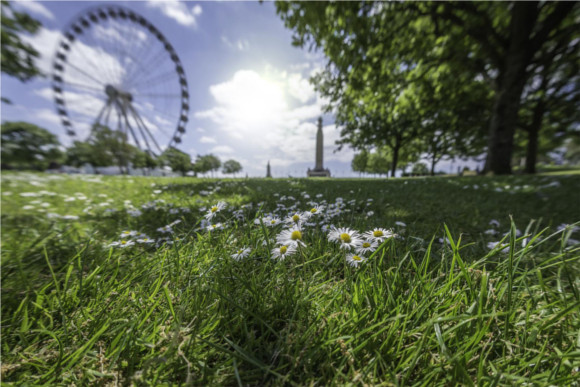 2-daisies-plymouth-hoe