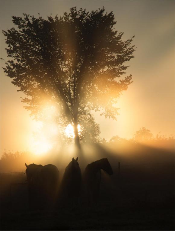 5-sunrise-behind-tree-horses