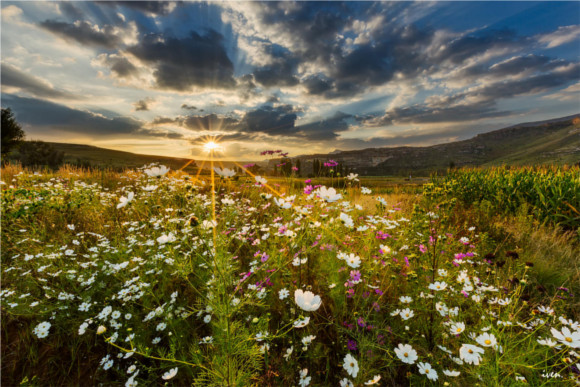 8-sunset-over-field-south-africa