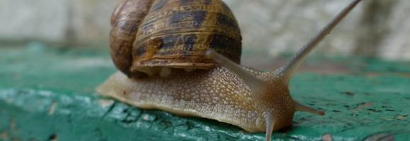 musée escargot