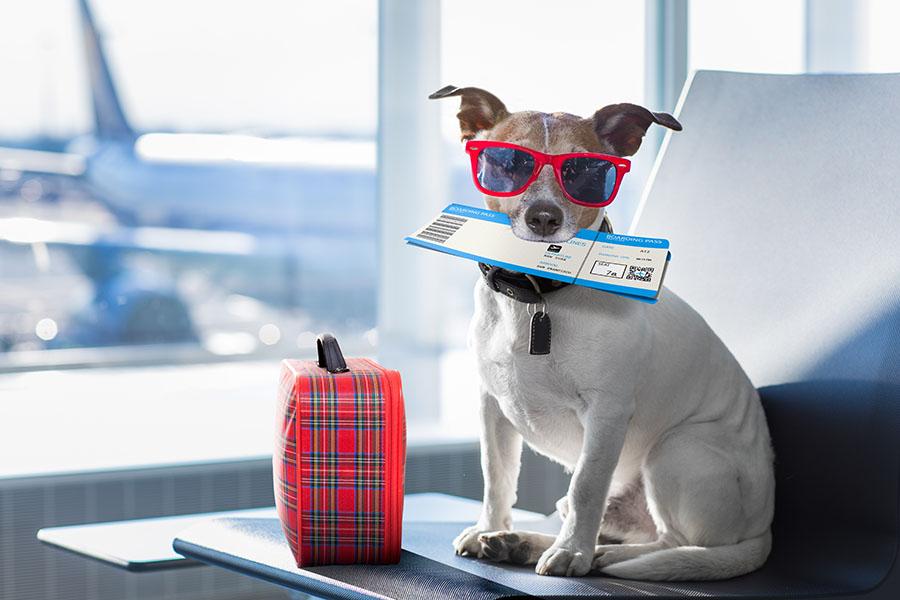 Pet Air Travel